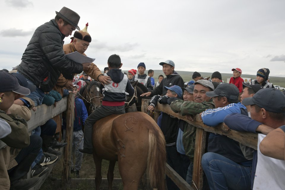 A horse has just been disqualified from racing - only horses 4 y.o. and younger were allowed to race. The age is defined by inspecting the horse's teeth: those older than 4 years old have molars grown up. Tos-Bulak, Tuva, Russia.